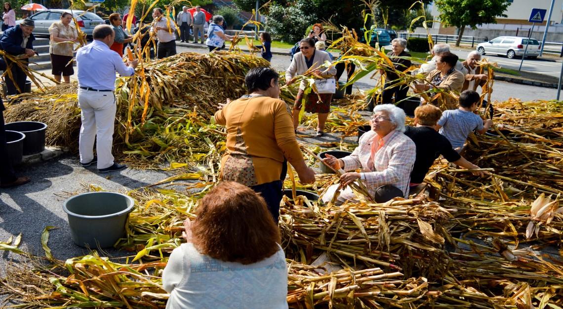 Festa das Colheitas de Prado celebra a genuína tradição do Minho!